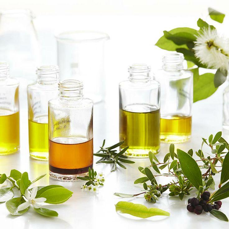 8878ef7e850c0fc8da51f032de04484d--essential-oil-blends-essential-oils.jpg