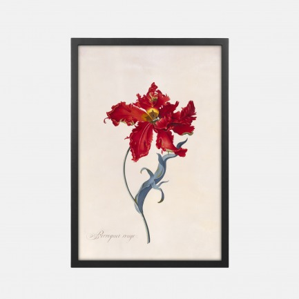 胭脂红色的鹦鹉郁金香 装饰画(定制品7个工作日内发货)