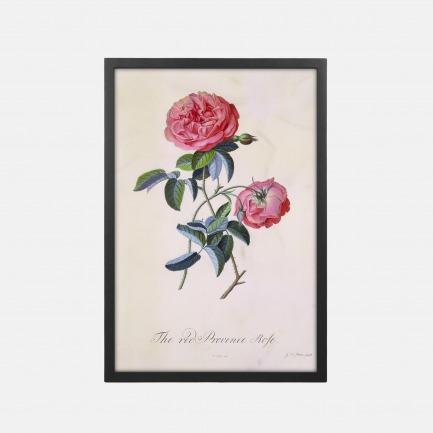 自然百科之普罗旺斯红玫瑰 装饰画 44x64cm | 【定制品15个工作日内发货】