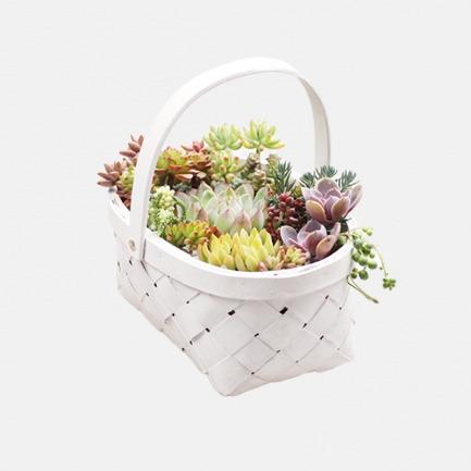DIY景观多肉盆栽【棉花堡】 | 简单种植出艺术感多肉 人人都是花艺师