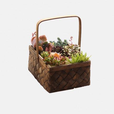 DIY景观多肉盆栽【黑森林】 | 简单种植出艺术感多肉 人人都是花艺师
