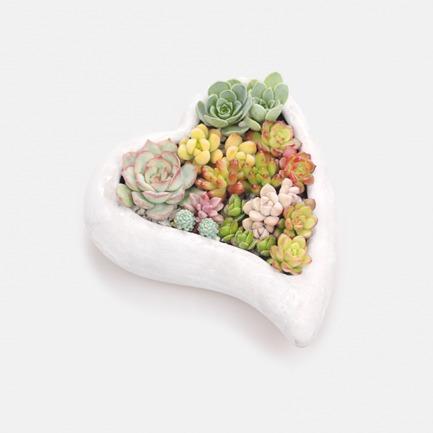 DIY景观多肉盆栽【遇见】 | 简单种植出艺术感多肉 人人都是花艺师