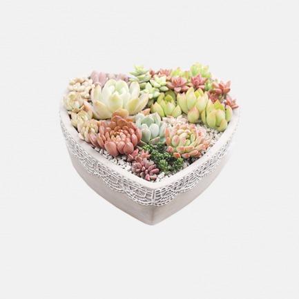 DIY景观多肉盆栽【真心】 | 简单种植出艺术感多肉 人人都是花艺师