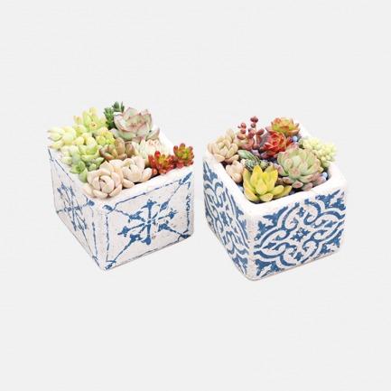 DIY景观多肉盆栽【爱琴海】 | 简单种植出艺术感多肉 人人都是花艺师