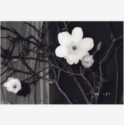 荒木经惟—<花人生>系列1 | 摄影原作,带亲笔签名