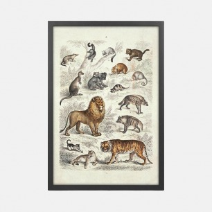 哺乳动物自然历史图表之一 装饰画(定制品15个工作日内发货)