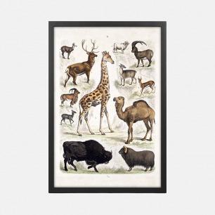 哺乳动物自然历史图表之二 装饰画(定制品15个工作日内发货)
