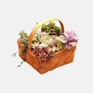 【午后的餐篮】 | DIY景观多肉盆栽,人人都是花艺师!
