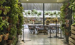 Restaurants/世外桃源般的马德里有机餐厅