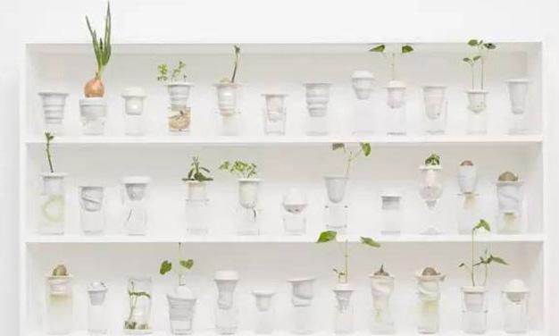 改变居家空间不求人, DIY 植栽练习/改变居家空间不求人, DIY 植