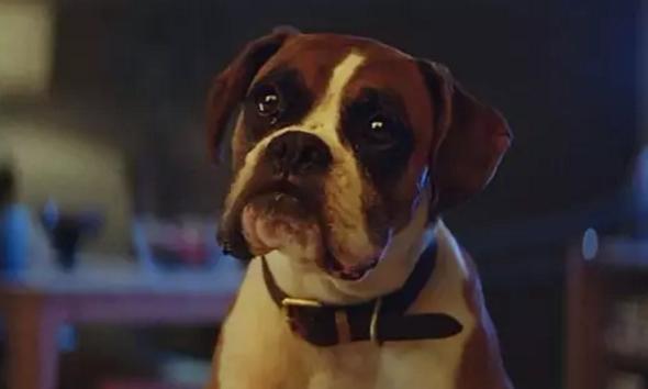 花费了一百万英镑的广告,讲的是一只狗狗的愿望/John Lewis今年圣诞广告