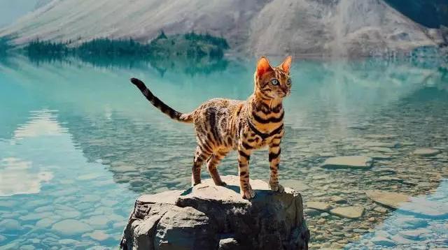 让一只好奇探索世界的猫,给你勇敢出走的决心/让一只好奇探索世界的猫,给你勇敢