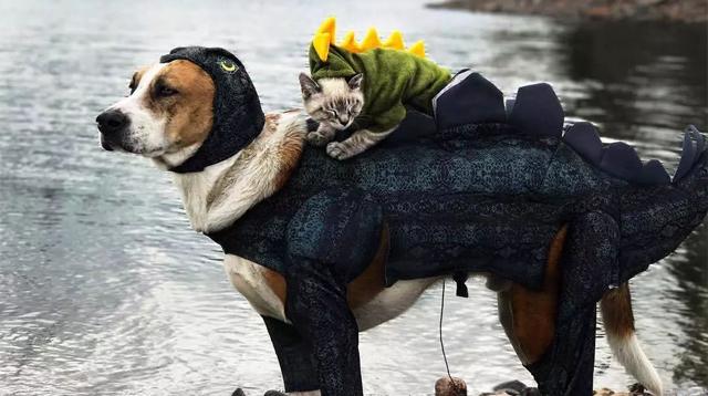两人一狗一猫,不可思议的探索世界组合/两人一狗一猫,不可思议的探索世界