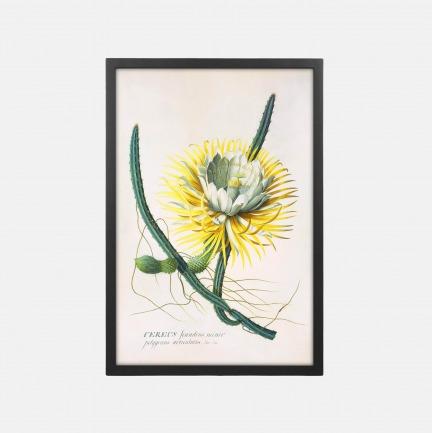 自然植物装饰画 仙人掌 | 百科系列画作 44x64cm