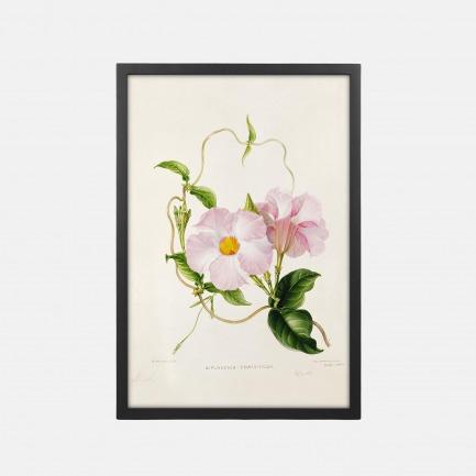 自然植物装饰画 飘香藤 | 感受自然与艺术的气息