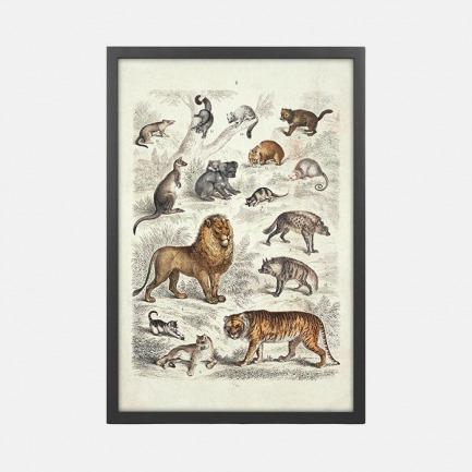 哺乳动物自然史 装饰画(一) | 19世纪镂刻版画 复刻版