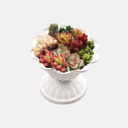DIY景观多肉盆栽【秘密】 | 简单种植出艺术感多肉,人人都是花艺师
