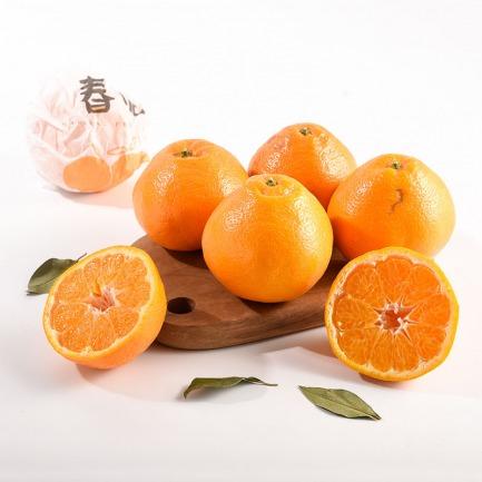 一咬爆汁的春见柑橘 | 比橙子清甜 比橘子细腻