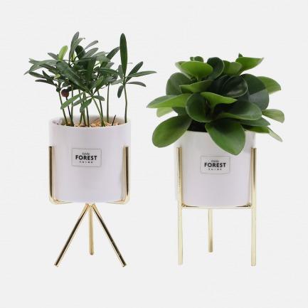 森林合唱团绿植组合 | 释放天然氧气 极简器物美学