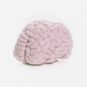 Brain Soap 大脑香皂