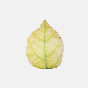 绿叶 抱枕