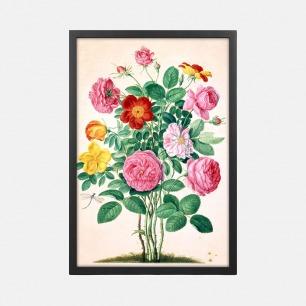 德国自然植物装饰画 玫瑰 | Johan Jakob Walther作品