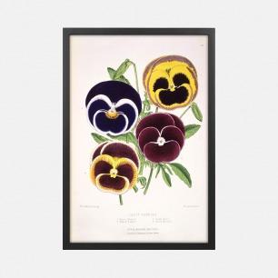 自然装饰画 花哨的三色堇 | Floral Magazine杂志插画