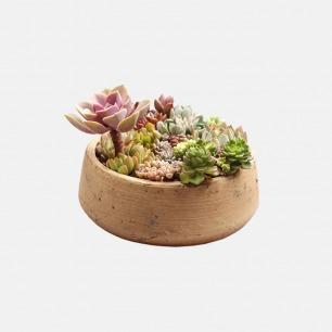 【巴比伦空中花园】 | DIY景观多肉盆栽