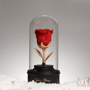 十二星座蓝牙音乐礼盒 | 手作厄瓜多尔永生玫瑰