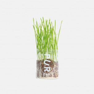 猫草小盆栽 | 高颜值猫草盆栽
