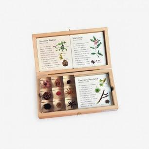 SOLA进口天然树脂植物标本木盒套装