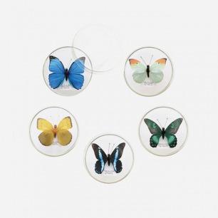 蝴蝶造型收纳夹 | 不同蝴蝶造型 标本般逼真