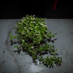 新种在工作室里的植物