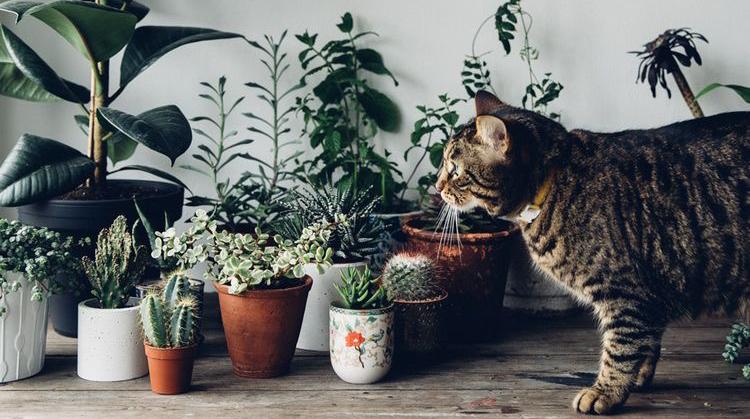 植物的力量正在席卷全球/植物的力量正在席卷全球