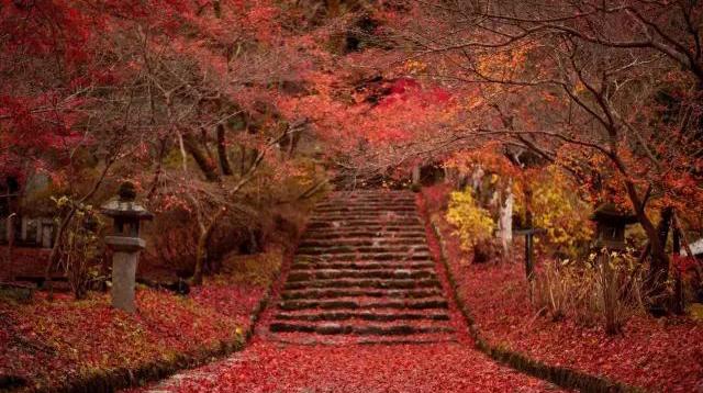 一场与红叶的邂逅,体会最纯正的和风秋意/一场与红叶的邂逅