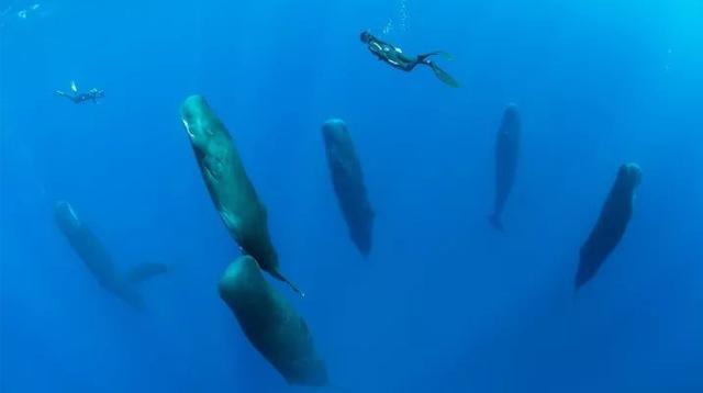 如果你遇到一支由海洋生物进化而成的外星文明/如果你遇到一支由海洋生物进化而成