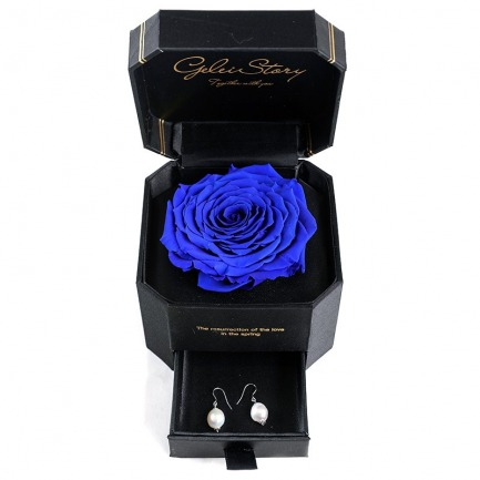 颜色/斯嘉丽蓝玫瑰